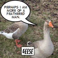Out of Stock: Geese